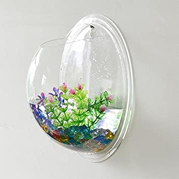 Kool decoración para el hogar para colgar de pared para 12,7 cm acrílico Copa Fish Tank Pecera: Amazon.es: Hogar