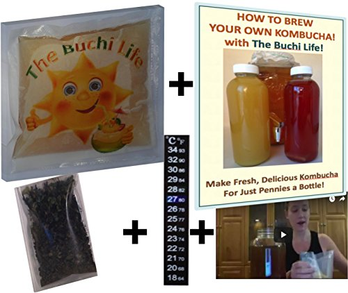 organic-kombucha-scoby-starter-kit-with-free-e-book-instructional-video-our-premium-tea-and-temperat
