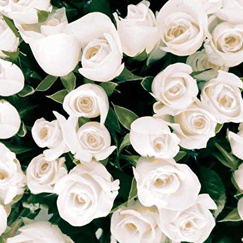 Duni Napkins Elegant Roses 33/x 33/cm 20/pcs.