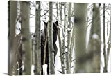 greatBIGcanvas Gallery-Wrapped Canvas entitled Wild horse hiding in trees, Turner Valley, Alberta, Canada by Deb Garside 48''x32''