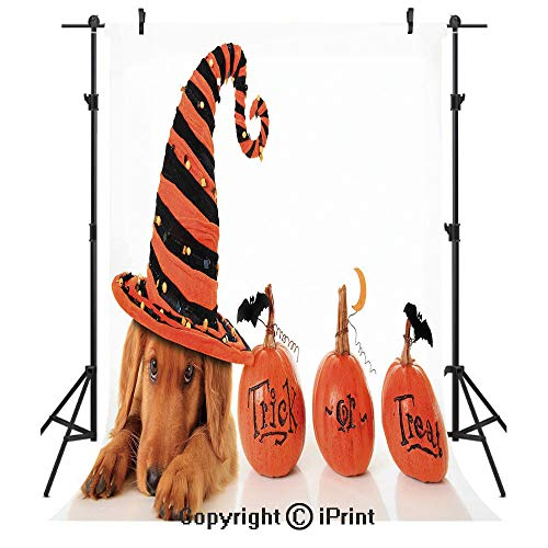 Halloween Photography Backdrops,Cute Puppy Wearing a Witch Hat Trick or Treat Little Bats Festive Funny,Birthday Party Seamless Photo Studio Booth Background Banner 5x7ft,Orange Black -