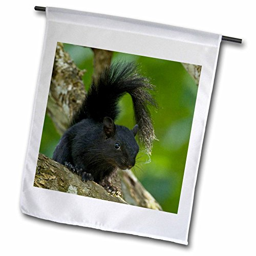 3dRose Mexico, Tamaulipas State, Red-Bellied Squirrel - Jaynes Gallery - Garden Flag, 12 by (Bellied Squirrel)