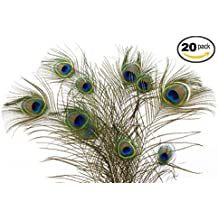 "Dashington Peacock Feathers, 30""-40"" (Pack of 20)"