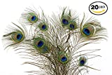 Dashington Peacock Feathers, 30''-40'' (Pack of 20)
