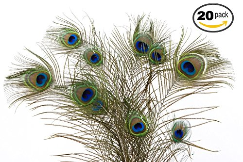 Dashington Peacock Feathers, 30-40 (Pack of 20)