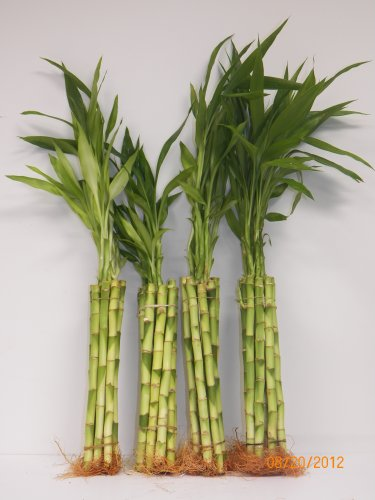 Wholesale Bamboo - 4