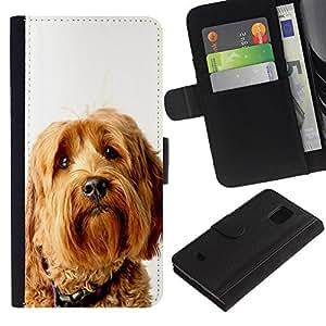 EuroCase - Samsung Galaxy S5 Mini, SM-G800, NOT S5 REGULAR! - labradoodle terrier yellow fur dog - Cuero PU Delgado caso cubierta Shell Armor Funda Case Cover