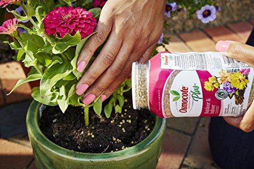 Osmocote 274150 Smart-Release Plant Food Plus Outdoor & Indoor, 1 LB