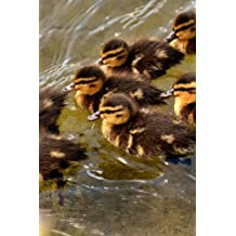 Ducklings Mallard Ducks Swimming in V Formation Journal: Take Notes, Write Down Memories in this 150 Page Lined Journal