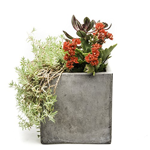 UPC 845837008498, Repose Cubo Succulent Planter, Medium