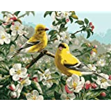Plaid Creates Paint by Number Kit (16 by 20-Inch), 21680 Goldfinches