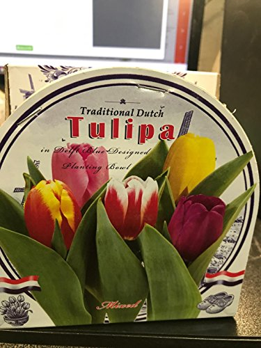 Mixed Tulip Indoor Growing Kit with Delft Ceramic Bowl, Grow your own Tulips,Great Gift, 5 Bulbs kit ready to grow