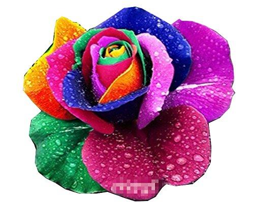 rose-flower-seeds-100-pieces-rainbow