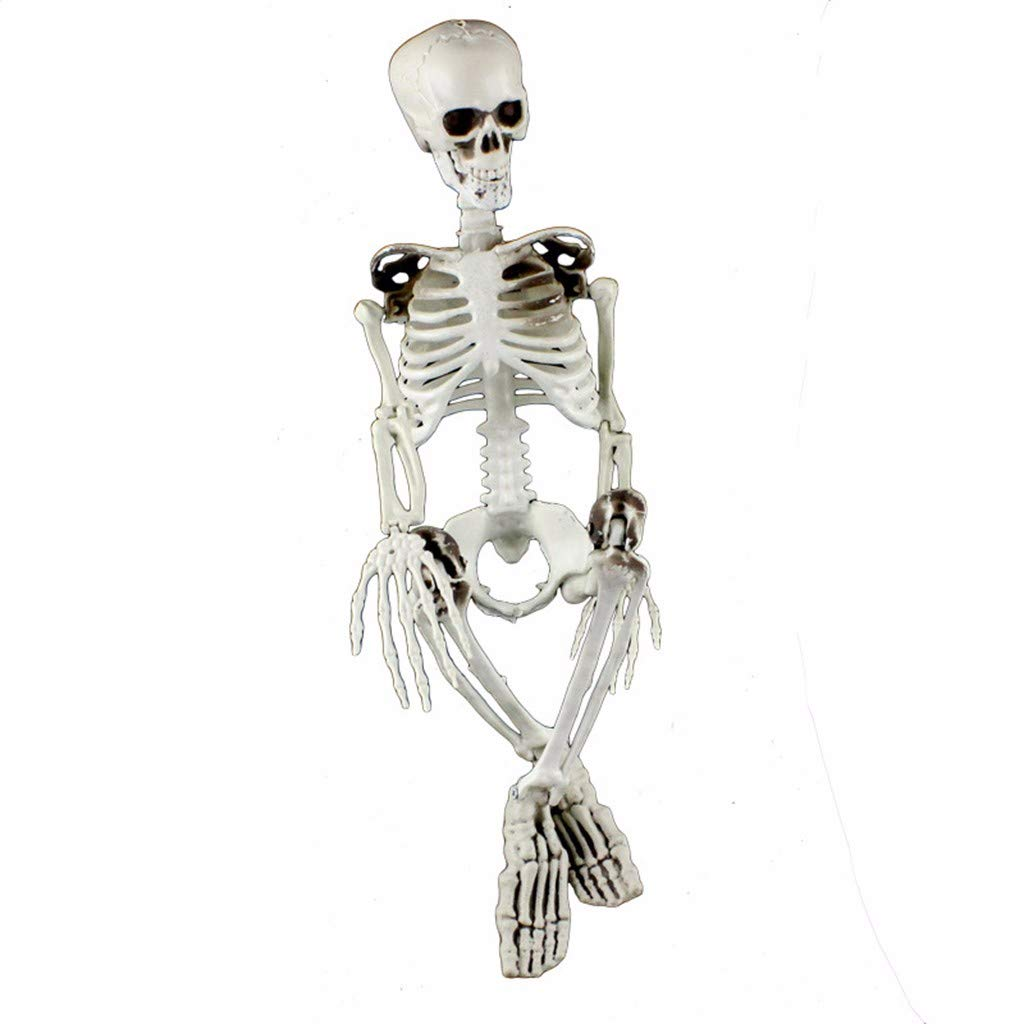 35in Halloween Skeleton, Gunel Realistic Full Body Hanging Adult Human Skeletons Skull Bones Models with Movable Halloween Props Party Decor Decoration (White) by Gunel home