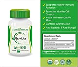 Organic Graviola (Soursop) Supplement 500mg x 100 Vegan Capsules for Immune & Mood Support - Premium Dietary Supplement for Healthy Cell Growth & Positive, Balanced Mood - Fresh Harvest from Peru