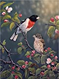 Toland Home Garden Rose Breasted Grosbeaks 28 x 40 Inch Decorative Spring Bird Flower House Flag