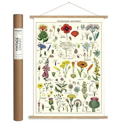 Cavallini Papers Cavallini Vintage Wall Dcor, Multicolor [並行輸入品]   B07T8PLSD6