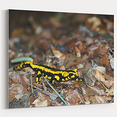 Westlake Art - Salamander Animal - 16x20 Canvas Print Wall Art - Canvas Stretched Gallery Wrap Modern Picture Photography Artwork - Ready to Hang 16x20 Inch ()