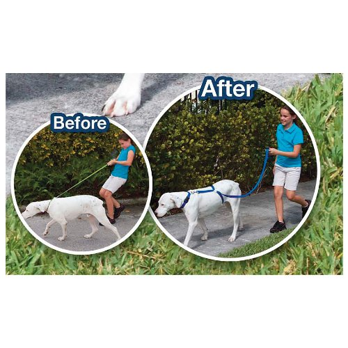 The Instant Trainer Dog Leash, My Pet Supplies