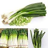 Saver 4000pcs Green Chinese Onion Scallion Spices Vegetable Seeds Garden Allium Fistulosum Plants