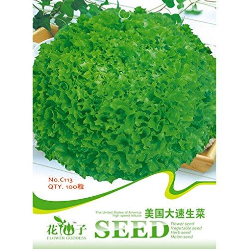 [Iceberg Lettuce Seeds Lactuca Sativa Vegetable 100pcs] (Bad Habit Costumes)