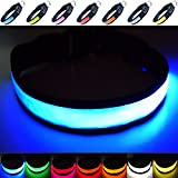 Super Bright USB Rechargeable LED Dog Safety Collar - Great Visibility & Improved Safety - 4 Colours, 3 Sizes (Blue, Medium)