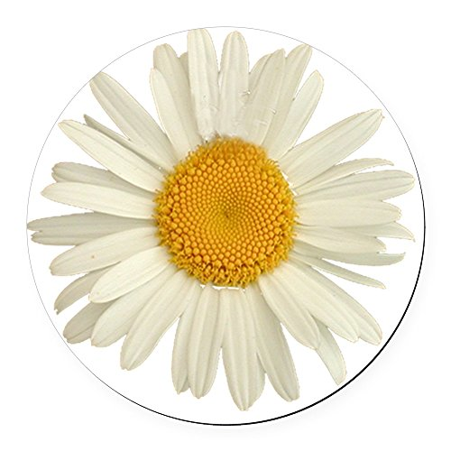 CafePress - Wild Daisy Round Car Magnet - Round Car Magnet, Magnetic Bumper Sticker