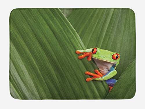 Red Eyed Tree Frog Care - 8