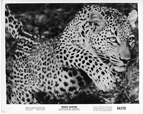 White Hunter original 1964 8x10 photo leopard running