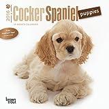 Cocker Spaniel Puppies 2016 Mini 7x7
