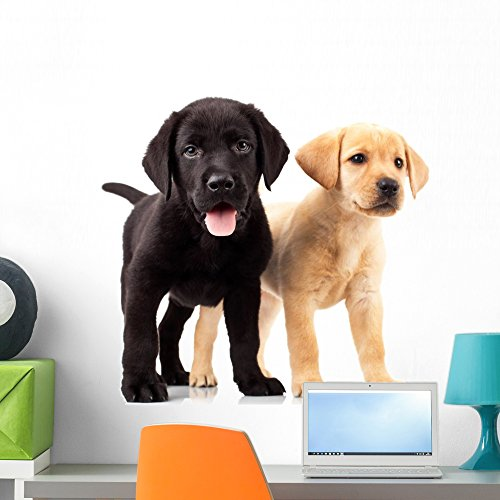 - Wallmonkeys FOT-34263216-24 WM163222 Two Cute Labrador Puppies Peel and Stick Wall Decals H x 24 in W, 24