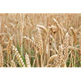 Rice Bran Wax (1 lb)
