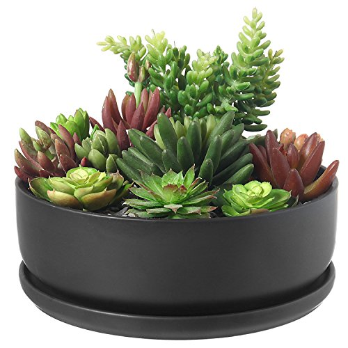 8 Inch Modern Round Black Ceramic Cactus Succulent Planter Bowl with Removable Saucer (Bowl Cactus Planter)