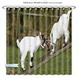 """Minicoso Shower Curtains Animal Decor Two Little Baby Goats On A Bench Fighting With Their Horns Picture Image White And Green Polyester Fabric For Bathroom Size-60""""W x 72""""H"""
