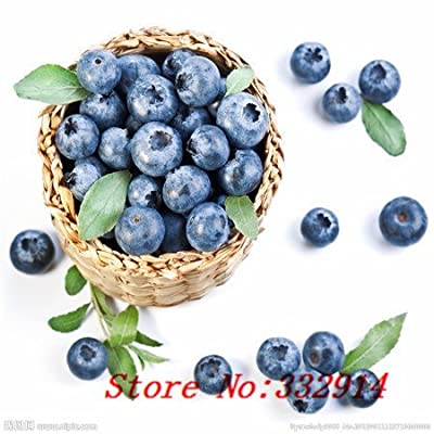 Hot Sale 100pc 2015 Fresh Organic blueberry seeds NON-GMO 10 kinds Fruit Seeds Four Season Planting Free Shipping