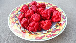 Trinidad Scorpion (Butch T Strain) Hot Pepper 10+ seeds