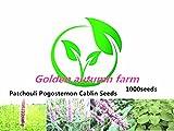 Golden autumn farm-1000 Patchouli Pogostemon Cablin Seeds