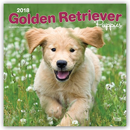 Golden Retriever Puppies 2018 Monthly Square Wall Calendar