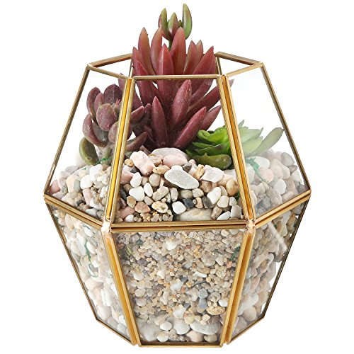 Vintage Brass-Tone Frame Glass Plant Terrarium, Decorative Open Top Display Case (Terrarium Brass)