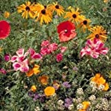 Outsidepride Northwest Wildflower Seed Mix - 1 LB