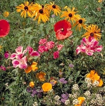Outsidepride Northwest Wildflower Seed Mix - 5 LB by Outsidepride
