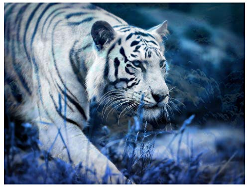 Hrank 5D DIY Diamond Painting,Full Drill Rhinestone Arts Craft for Home Wall Decor,Tiger,Size:35X45CM/14X18inch ()