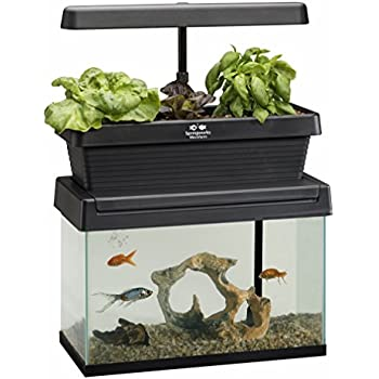 Brio 35 Aquaponics System Review Aquaponic He has been married to actress jean smart since 1987. brio 35 aquaponics system review