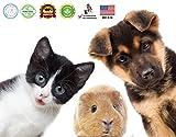 Odie and Cody Natural Dog Shampoo, Organic Pet