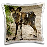 3dRose African Wild Dog, Painted Dog, Conservation Project, Zimbabwe, Africa - Pillow Case, 16 by 16-inch (pc_187884_1)