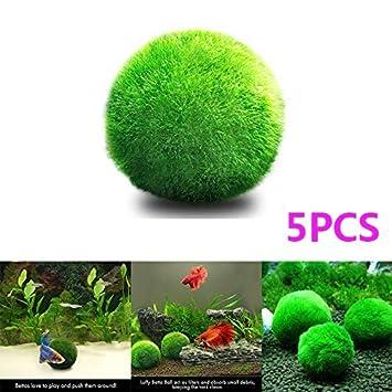 OCJEDEEE Moss Ball, Planta de Acuario Vivo para la decoración de ...