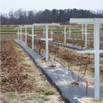 Mr.Garden, Raspberry Trellis with Adjustable Arms, Raspberry Stake, Vineyard Trellis garden trellis for climbing vining plant support, 7-Feet, 8 Pack