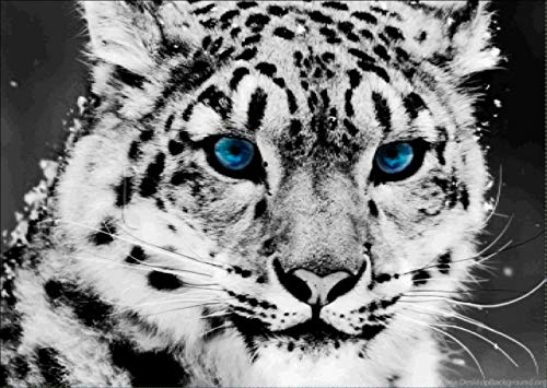 (DIY Diamond Painting Kits for Adults, Cute Leopard Full Drill Rhinestone Embroidery Cross Stitch Supply Arts Craft Canvas Wall Decor 16x12 inches )
