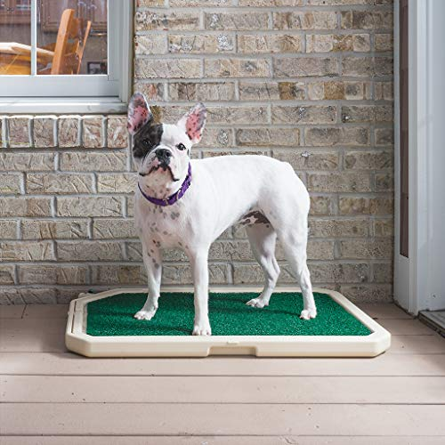 PetSafe Piddle Place Indoor/Outdoor Dog Potty, Alternative to Puppy Pads, Indoor Restroom for - Dog Toilet Pet New