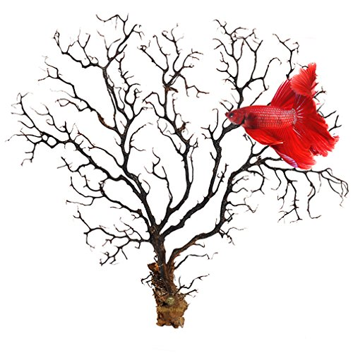 Natural Aquarium Sea Fan by SunGrow --- Dramatic Piece of Aquarium Décor - Very Strong & Unbendable Sea Willow - Great for Fish Tanks, Terrariums, Plant Tanks, Art Projects, & Wall Decor